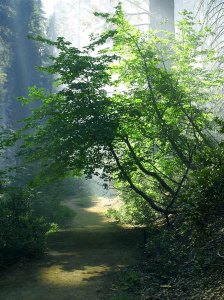 Smoky Path from PDPhoto