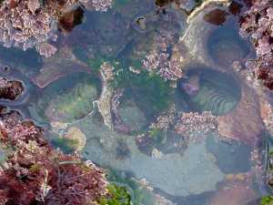 Tide pools in San Diego, California [Photo from PDPhoto.org, used with permission via Creative Commons]