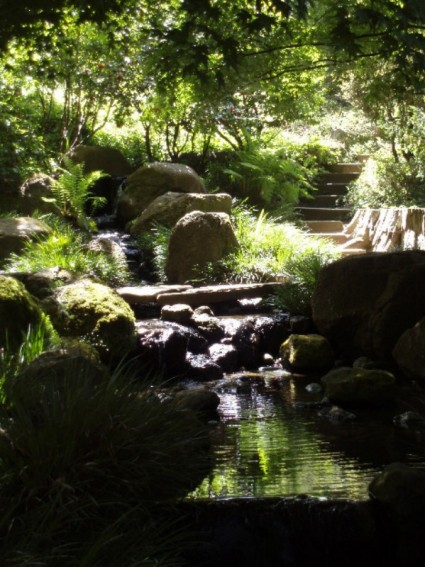 Shadow and Light in the Zen Garden Pool, San Francisco Botanical Garden. Photo by Jamie S. Walters. If you use it, credit it. Merci.