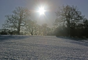 Winter Sun. Photograph by Ian Capper, kindly shared via Creative Commons and Wikipedia.