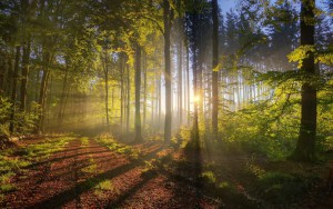 Morning sunlight streaming through the trees. PD-US photo from PD pictures.net.