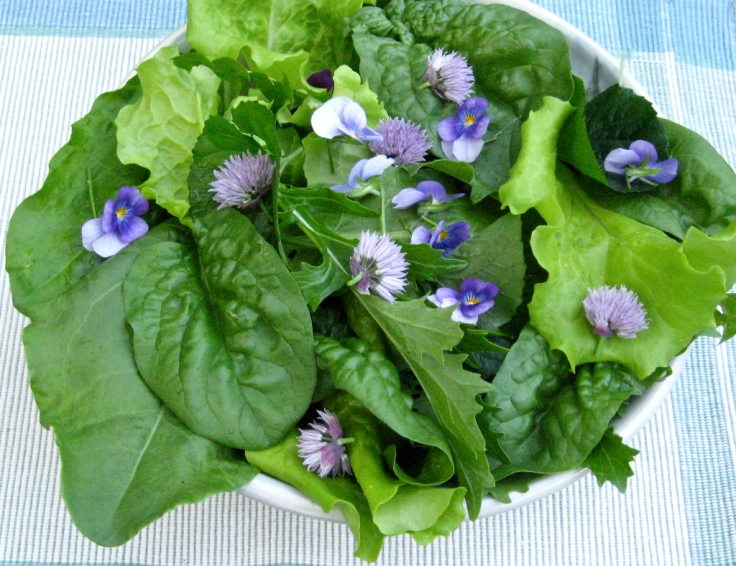 Photo of spring salad with violet greens, dandelion greens, chives and violas