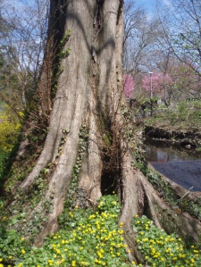 Deep Roots and Spring Growth. Photo by Jamie Walters, 2011.