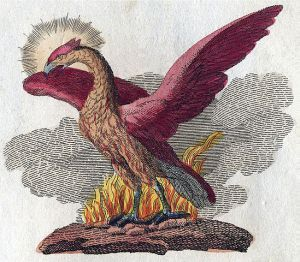 A phoenix depicted in a book of legendary creatures by FJ Bertuch (1747–1822). Public domain image courtesy of Wikimedia.
