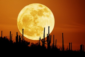 Saguaro Moon, 2007, from APOD-NASA.