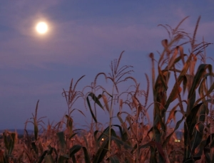 Super Harvest Moon-Rise, photo courtesy of NASA-Science.