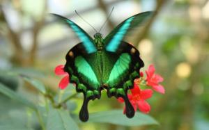 Emerald Green Butterfly. Image courtesy of Nature's Crusaders.