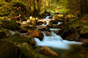 Nature abundance. Mountain stream in Matterhorn forest. PD Pictures dot net.